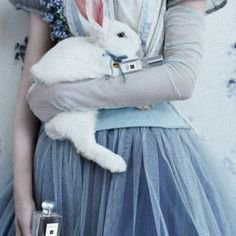 rabbit white
