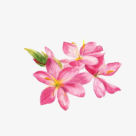 Simple Small Fresh Hand-painted Watercolor Pink Flower, Small Fresh, Simple, Watercolor PNG and PSD File for Free Download