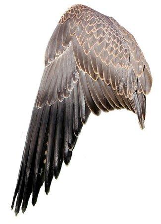 grey brown png filler