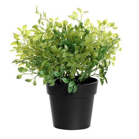 oregano pot plant