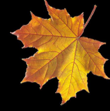 leafy leaves fall autumn niche moodboard freetoedit...