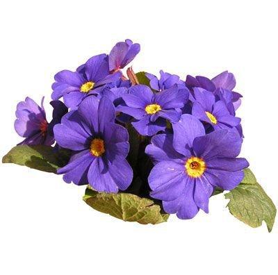 purple flower png filler