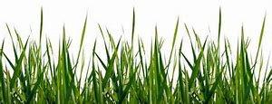HERBE/GRASS