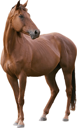 Horse | Independents Own