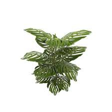 tropical plant png - Google Search