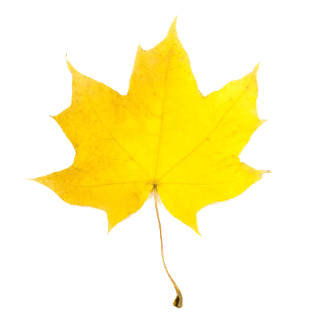 yellow-leaf-fall-clipart-1.jpg (600×600)