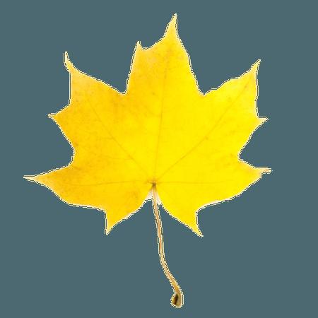 yellow-leaf-fall-clipart-1.jpg (600×600)