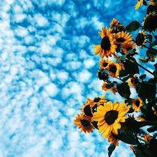 blue sunflower aesthetic - Google Search