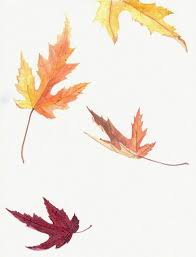 leaves fall - Google Search