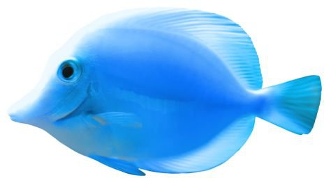 blue fish filler png ocean sea