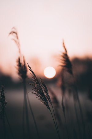 silhouette of grass during sunset photo – Free Grass Image on Unsplash