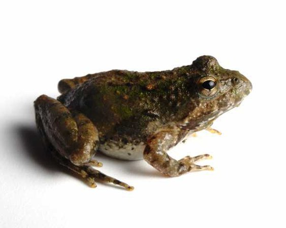 Nebraska man holds frog hostage in standoff with deputy | cleveland.com