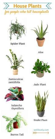 various houseplants