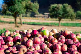 apple picking word - Google Search