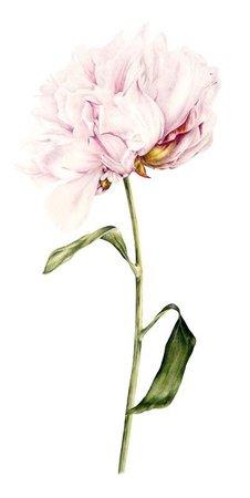 pink drawn flower - Google Search