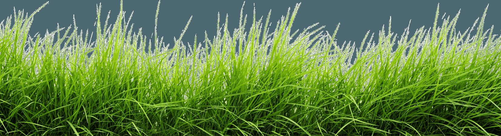 Line Of Grass transparent PNG - StickPNG