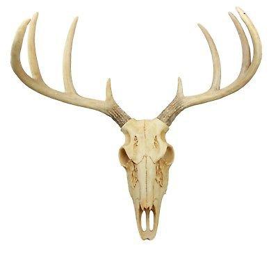 EXOTIC TROPHY Deer Skull Antler Decor for Home Wall Mount Buck Head Decoration   eBay