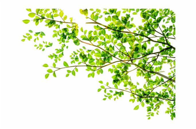 leaves #leaf #green #tree #vector #freetoedit - Powerpoint Templates