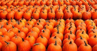 pumpkin patch - Google Search