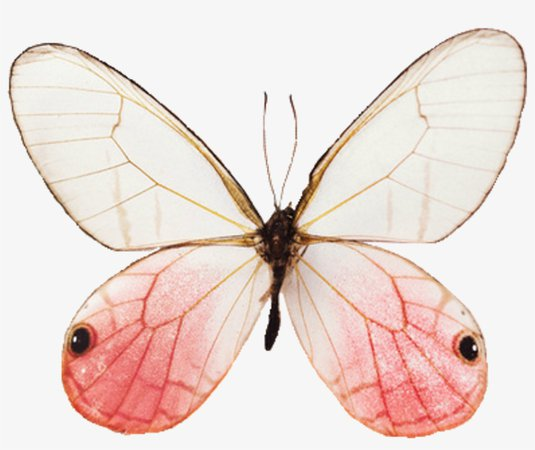 fairy aesthetic png - Google Search