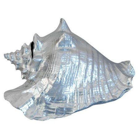 silvery blue conch shell