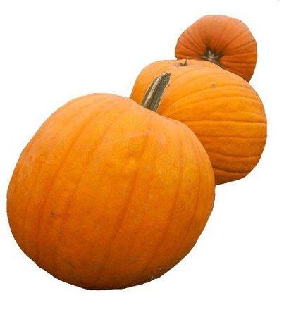 orange pumpkin png filler