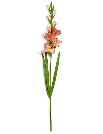 Peach Gladiolus Stalk