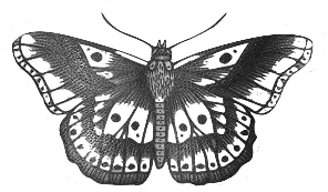 harry styles butterfly - Google Search