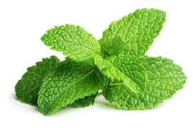 mint leaves - Google Search