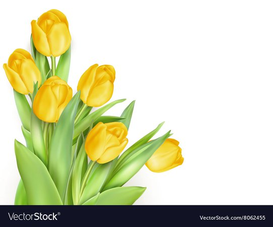 Tulip pinktulips eps 10 Royalty Free Vector Image