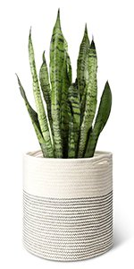 Amazon.com : Mkono Plant Stand Mid Century Wood Flower Pot Holder Display Potted Rack Rustic Decor, Up to 10 Inch Planter (Plant and Pot NOT Included), Brown : Garden & Outdoor