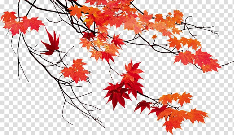 red fall leaves - Google Search