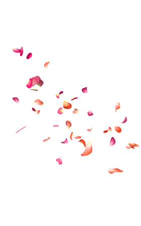Falling Rose Petals PNG Free Download | PNG Mart