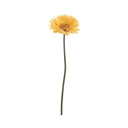 Yellow flower stalk