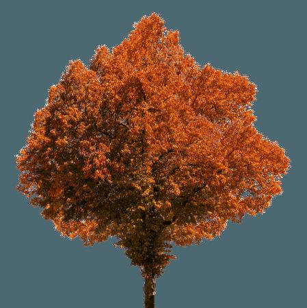 Autumn Tree transparent PNG - StickPNG