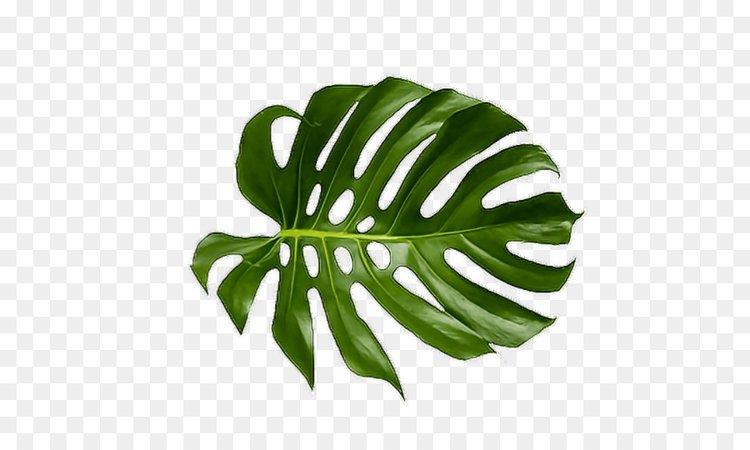 kissclipart-tropical-leaves-png-clipart-palm-trees-tropics-lea-96d8254d1f673b05.jpg (900×540)