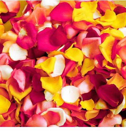 tropical flower petals