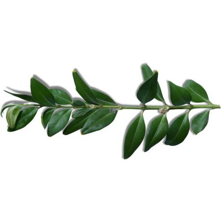 green leaf png filler