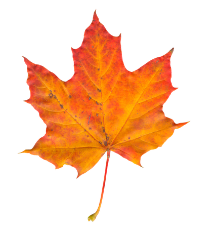 Autumn Leaf Clipart (Icon Supplies)