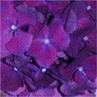 Beyoncé purple flowers