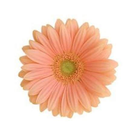 Peach Flowers - Wholesale Wedding Flowers – BloomsByTheBox.com