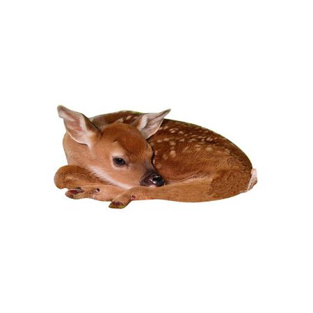 deer png filler animal brown