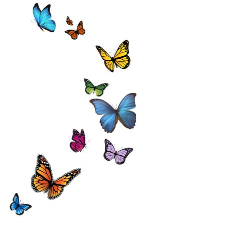 Butterfly Flying Stream