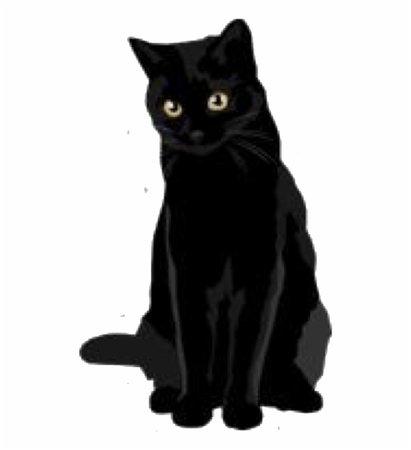 black cat halloween tumblr - Google Search