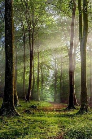 beautiful forest - Google Search