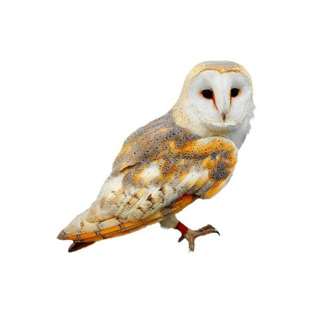 owl png filler brown barn