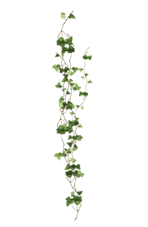 Download Plant Vine Ivy Free Clipart HD Clipart PNG Free | FreePngClipart