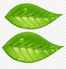 transparent green leaf png - Google Search