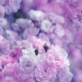 purple pink flower aesthetic - Google Search
