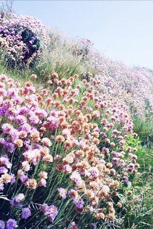 Pastel Flowers in Field Background